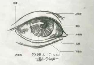 新手素描眼睛的起形方法