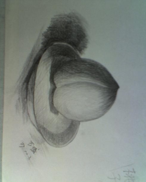 素描桃子与盘子