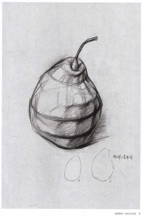 素描梨子的形体构造
