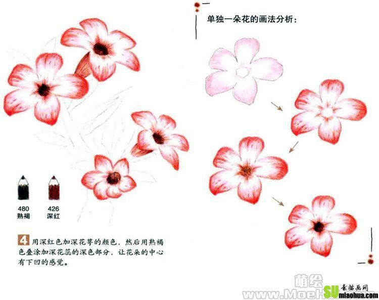 彩色铅笔画沙漠玫瑰绘画教程