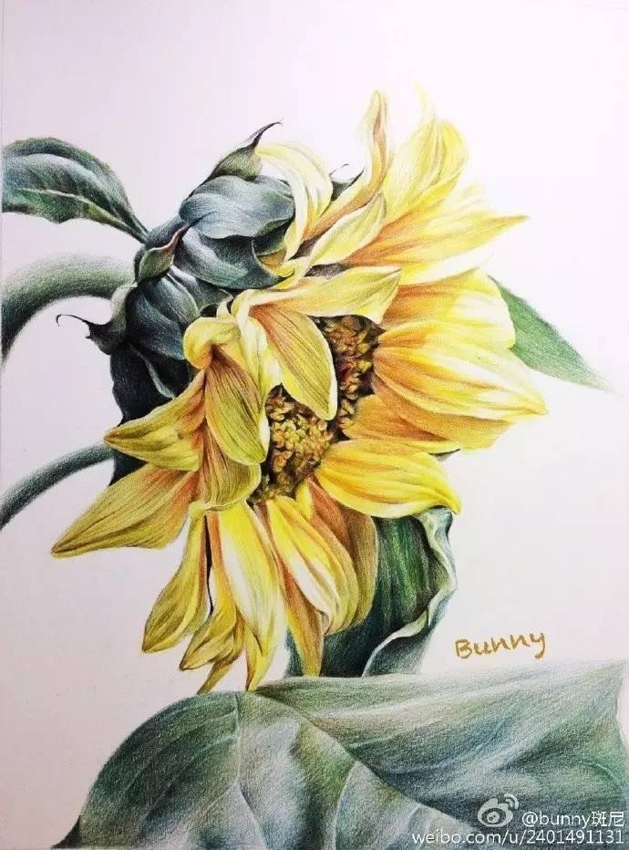 【彩铅教程】送你一朵向日葵!